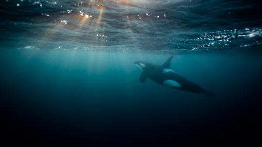 stephane grazotto underwater orca expedition sunbeam