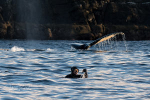 diver pointing inn the water behind fluke whale tail