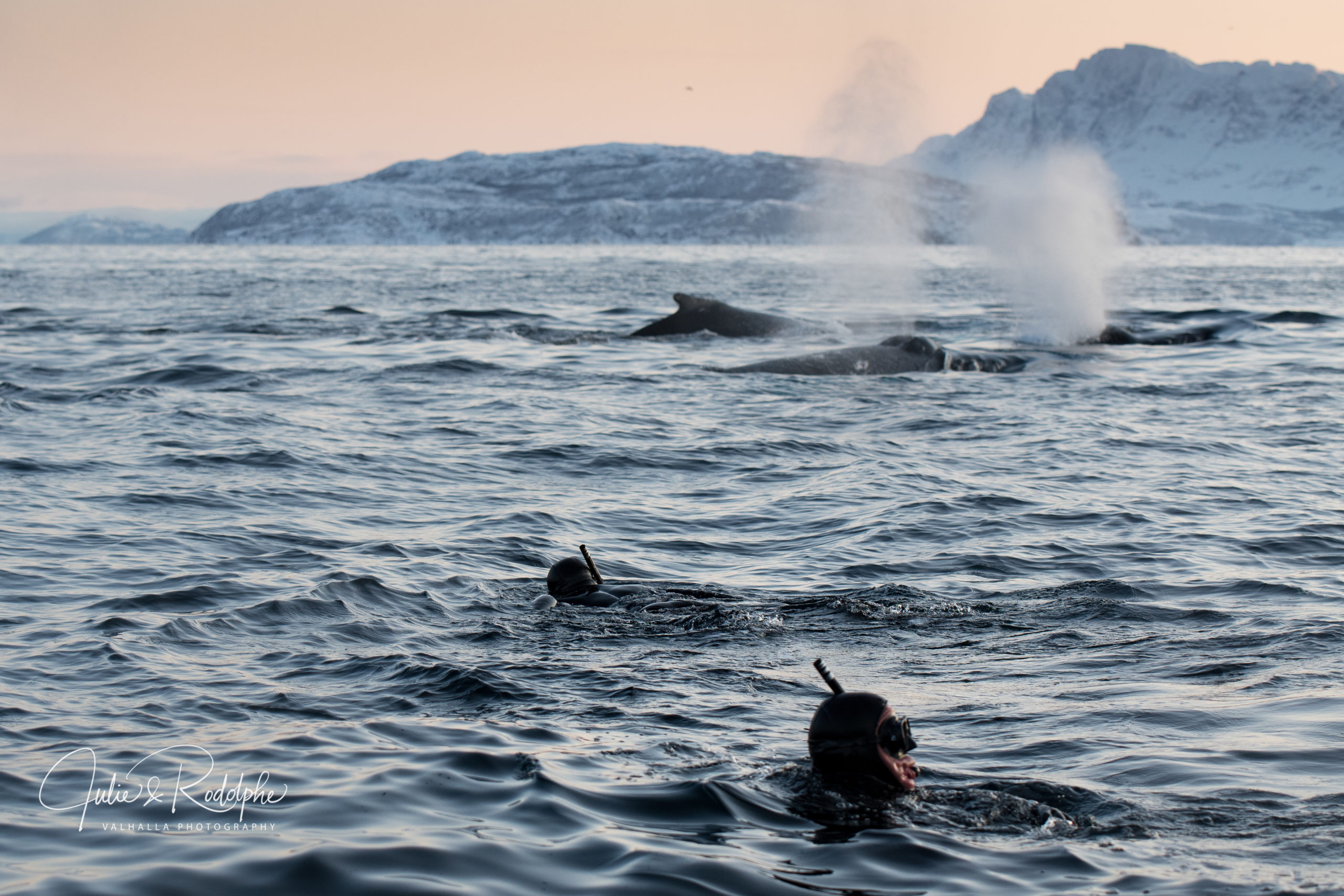snorkelers in the arctic sea looking at whales blows