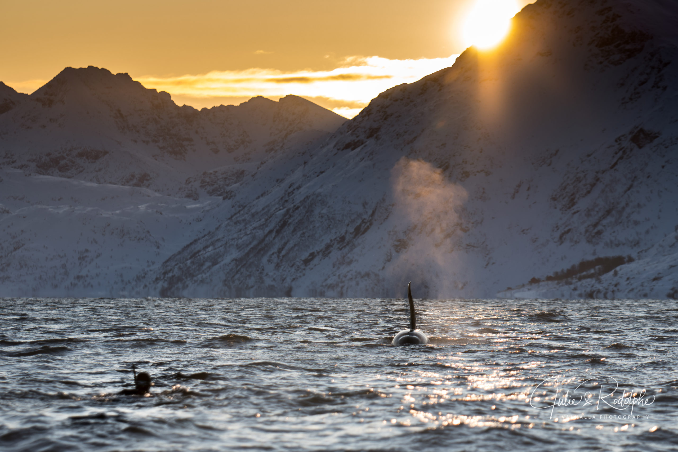 big orca going towards diver with sun behind the mountains