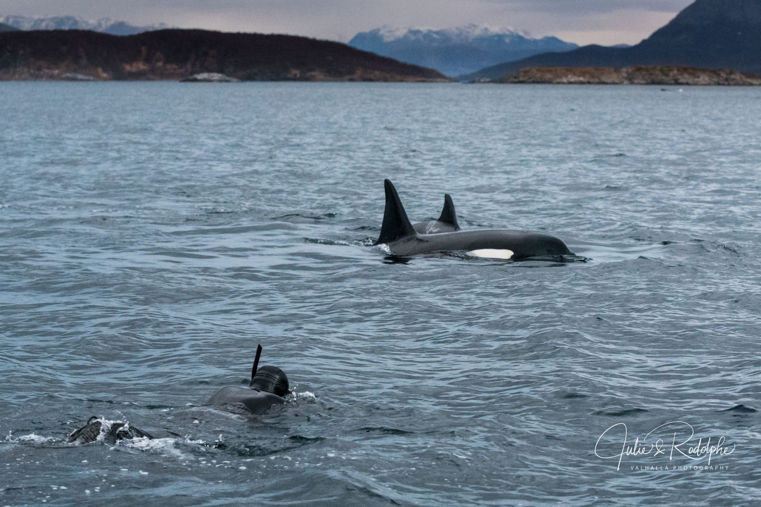 snorkeler swimming towards killerwhales with mountains breathtaking bucket list