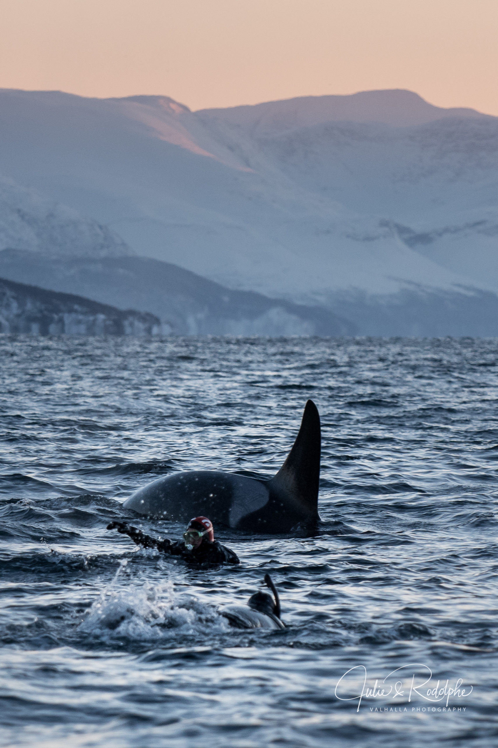diver pointer with orca fin in fjord norway arctic valhalla expedition